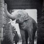 Big Charlie arch