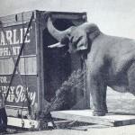Big Charlie & Box