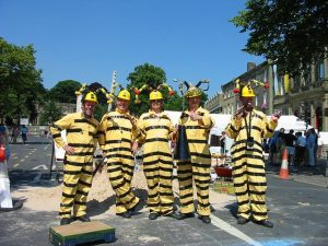 The Bees Team